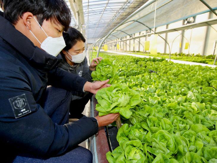서유채 농장(아쿠아포닉스 농법) (1)