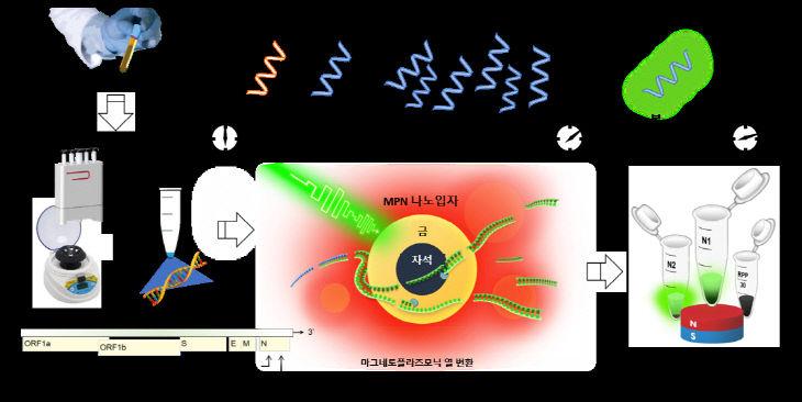 그림 1. nanoPCR 기술을 이용한 코로나 바이러스 진단 과정