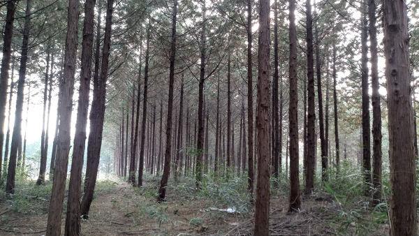 산림자원조성육성사업(덕정마을 숲)
