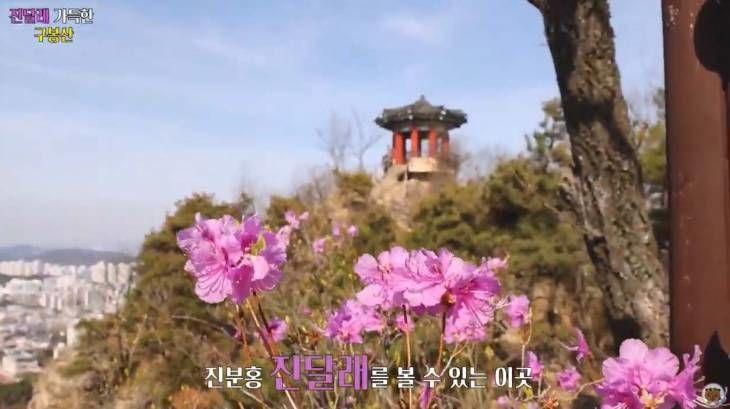 대전 `구봉산` 진달래 봄꽃명소