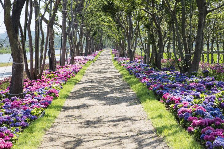 도초명품숲길