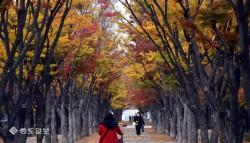 [영상]'가을이 무르익어 가고 있다'
